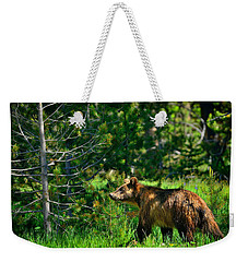 Weekender Tote Bag featuring the photograph Grizzly Bear 760 by Greg Norrell
