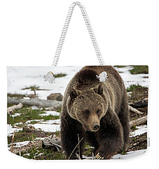 Weekender Tote Bag featuring the photograph Grizzly Bear In Spring by Jack Bell