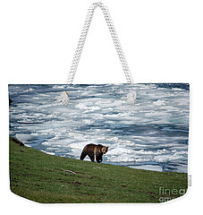 Weekender Tote Bag featuring the photograph Grizzly Bear On Frozen Lake Yellowstone by Shawn O'Brien