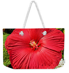 Weekender Tote Bag featuring the photograph Hardy Hibiscus by Sue Smith