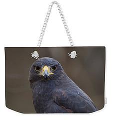Harris Hawk Weekender Tote Bag by Chris Flees