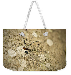 Weekender Tote Bag featuring the photograph Harvestman Spider by Chevy Fleet