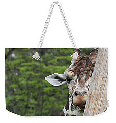Weekender Tote Bag featuring the photograph Hay Not Just For Horses by Judy Whitton