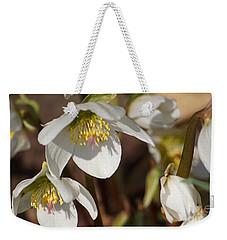 Helleborus Niger - Christrose Weekender Tote Bag