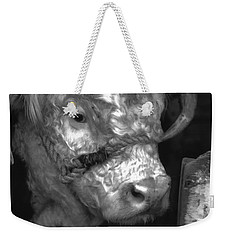 Hereford Bull In Black And White Weekender Tote Bag by Cathy Anderson