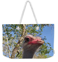 Weekender Tote Bag featuring the photograph Ostrich Here's Looking At You by Belinda Lee