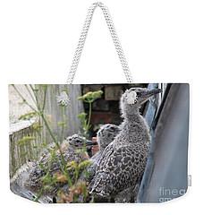 Herring Gull Chicks Weekender Tote Bag