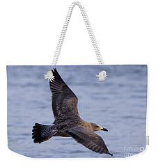 Weekender Tote Bag featuring the photograph Herring Gull In Flight Photo by Meg Rousher