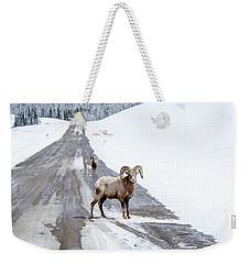 On The Road Again Big Horn Sheep  Weekender Tote Bag