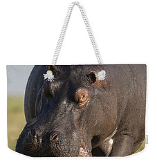 Hippopotamus Bull Charging Botswana Weekender Tote Bag by Vincent Grafhorst