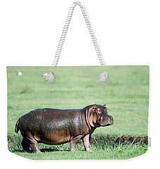 Hippopotamus Hippopotamus Amphibius Weekender Tote Bag by Panoramic Images