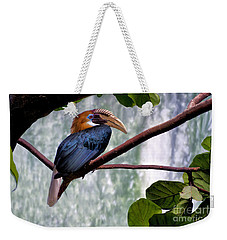 Hornbill In Paradise Weekender Tote Bag by Adam Olsen