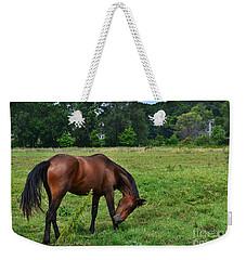 Horse In Holland Michigan Weekender Tote Bag