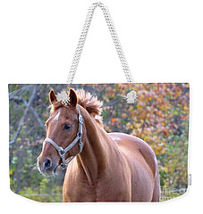 Weekender Tote Bag featuring the photograph Horse Muscle by Glenn Gordon