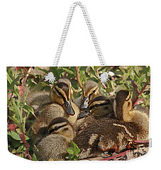Weekender Tote Bag featuring the photograph Huddled Ducklings by Kate Brown