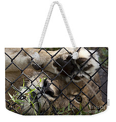 I Want To Go Home - Female African Lion Weekender Tote Bag