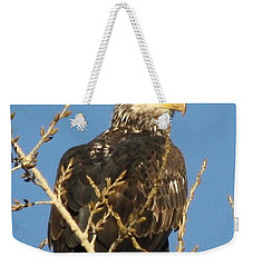 Immature Bald Eagle Weekender Tote Bag