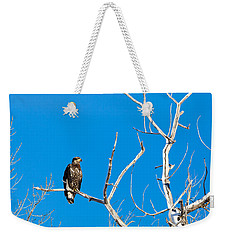 Weekender Tote Bag featuring the photograph Immature Bald Eagle by Michael Chatt