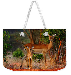 Impala And Young Weekender Tote Bag by Amanda Stadther