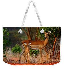 Impala And Young Weekender Tote Bag