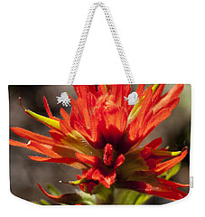 Weekender Tote Bag featuring the photograph Indian Paintbrush by Belinda Greb