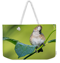 Indigo Bunting Female Weekender Tote Bag by Bill Wakeley