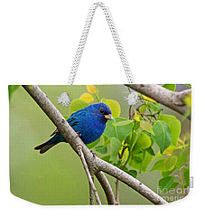 Blue Indigo Bunting Bird  Weekender Tote Bag by Luana K Perez