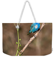 Indigo Bunting Portrait Weekender Tote Bag by Bill Wakeley
