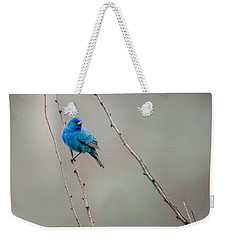 Indigo Bunting Square Weekender Tote Bag by Bill Wakeley