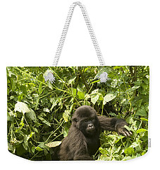 Weekender Tote Bag featuring the photograph Into The Light by Liz Leyden
