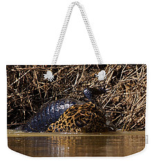 Jaguar Vs Caiman 3 Weekender Tote Bag