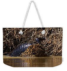 Jaguar Vs Caiman 3 Weekender Tote Bag by David Beebe