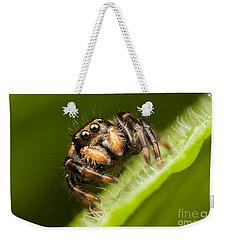 Jumping Spider Phidippus Clarus I Weekender Tote Bag