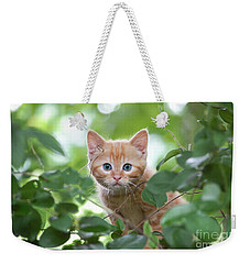 Jungle Kitty Weekender Tote Bag