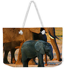Weekender Tote Bag featuring the photograph Kalahari Elephants by Amanda Stadther