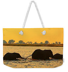 Weekender Tote Bag featuring the photograph Kalahari Elephants Crossing Chobe River by Amanda Stadther