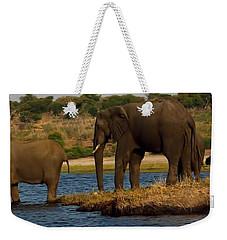 Weekender Tote Bag featuring the photograph Kalahari Elephants Preparing To Cross Chobe River by Amanda Stadther