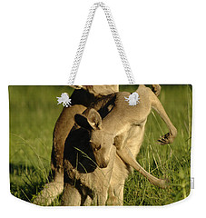 Kangaroos Taking A Bow Weekender Tote Bag by Bob Christopher