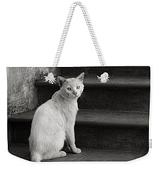Weekender Tote Bag featuring the photograph Kimba by Laura Melis