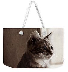 Kitten In The Light Weekender Tote Bag by Melanie Lankford Photography