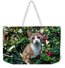 Kitten Weekender Tote Bag by Pamela Walton