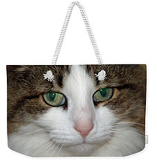 Kitty Weekender Tote Bag by Aimee L Maher Photography and Art Visit ALMGallerydotcom