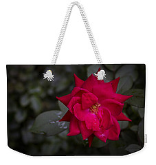 Weekender Tote Bag featuring the photograph Knockout Red by Ben Shields