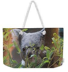Koala Bear  Weekender Tote Bag by Dan Sproul