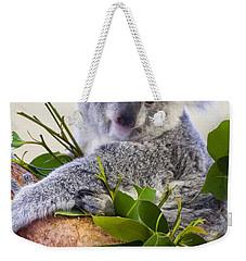 Koala On Top Of A Tree Weekender Tote Bag by Chris Flees