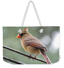 Weekender Tote Bag featuring the photograph Lady Cardinal by Lizi Beard-Ward