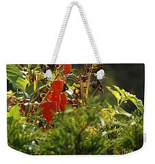 Weekender Tote Bag featuring the photograph Lantern Plant by Brenda Brown
