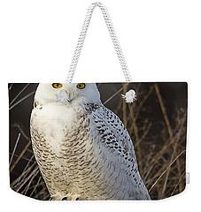 Late Season Snowy Owl Weekender Tote Bag by John Vose
