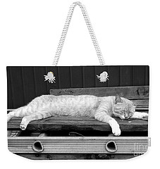 Weekender Tote Bag featuring the photograph Lazy Cat by Andrea Anderegg
