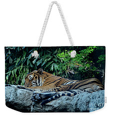 Lazy Cat Weekender Tote Bag by Michelle Meenawong